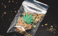 V Austrálii legalizovali rekreační užívání marihuany pro osobní účely. Můžeš mít u sebe až 50 gramů
