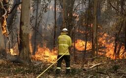 V austrálskych požiaroch zomrelo už takmer pol miliardy zvierat. Tretina koál zahynula