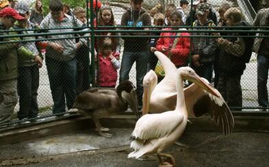 V bojnickej ZOO hlásia vtáčiu chrípku. Areál je pre návštevníkov zatvorený