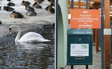 V bojnickej ZOO museli kvôli vtáčej chrípke utratiť už 41 kusov vtáctva