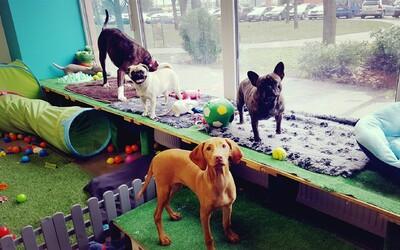 V Bratislave otvorili škôlku pre psov. Tvoj miláčik už nemusí tráviť dlhé hodiny sám, kým si preč