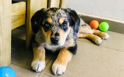 V Bratislave pribudla nová škôlka pre psov. Chlpáča tam odnesieš ráno a on sa v nej bude celý deň hrať či spať