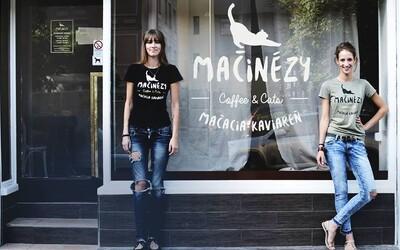 V bratislavskej kaviarni Mačinézy si vychutnáš dobrú kávu a zároveň pomôžeš zvieratkám v núdzi (Rozhovor)