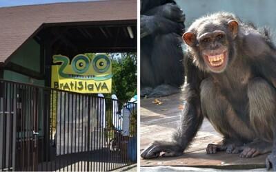 V bratislavskej zoo si môžeš adoptovať vlastné zvieratko a prispievať na jeho chov. Rybičky podporíš už za 15 eur, šimpanza za 1 500