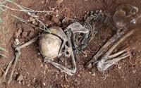 V Británii otvoria farmu na ľudské mŕtvoly. Vedci na nej budú sledovať, ako sa telá rozkladajú
