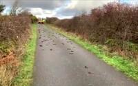 V Británii padali z nebe mrtví ptáci. Nikdo neví, co se stalo
