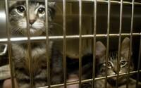 V bytě na Ústecku našli 38 koček. 16 jich bylo již po smrti