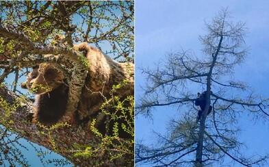 V centre Starého Smokovca sa na strome ocitli tri medvede. Netradičná trojica spôsobila v mestečku poriadny rozruch