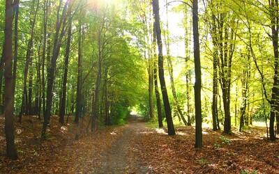 V Česku se letos vysadí 55 milionů stromů