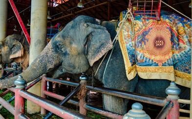 V cirkusoch na Slovensku možno budú vystupovať len fretky, psy a mačky. Na slony, levy či tigre budeme musieť do Česka
