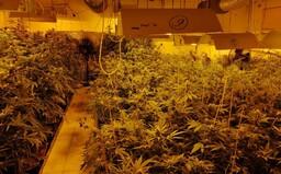 V drogovom laboratóriu v Komárne našli 1055 rastlín marihuany, 2,5 kila sušiny a samopal
