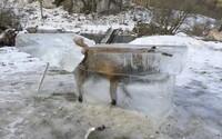 V Dunaji zamrzla liška poté, co se do studené vody propadla skrz tenký led. Zvíře doplatilo na extrémní zimu v Evropě