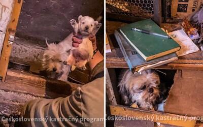 V hrozivých podmienkach na Sliači funguje množiareň psov. Za rok dokáže majiteľovi zarobiť okolo 30-tisíc eur