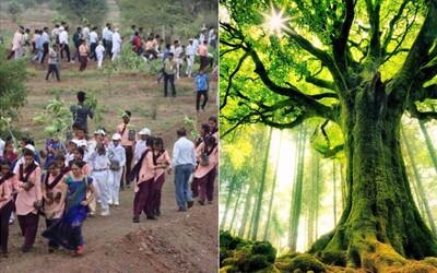 V Indii zasadili neskutočných 66 miliónov stromov za 12 hodín a vytvorili tak svetový rekord