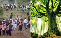 V Indii zasadili neuvěřitelných 66 milionů stromů za 12 hodin a vytvořili tak světový rekord