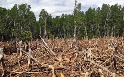 V Jižní Americe mizí obrovské lesní plochy. Podívej se, jak se změnila Země od roku 1992