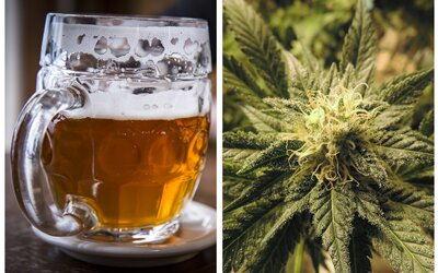 V Kanadě začali vyrábět vůbec první konopné pivo svého druhu. Účinek je prý téměř okamžitý