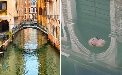 V krištáľovo čistých kanáloch Benátok natočili spokojne plávajúcu medúzu. Pod hladinou sa ukrýva rušný život