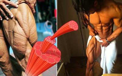 V lidském těle objevili nový sval! Měli bychom nyní nazývat stehna kvinticepsy a ne kvadricepsy?