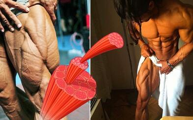 V ľudskom tele objavili nový sval! Mali by sme odteraz nazývať stehná kvinticepsy a nie kvadricepsy?