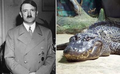 V moskovskej ZOO zomrel aligátor, ktorý vraj patril Adolfovi Hitlerovi