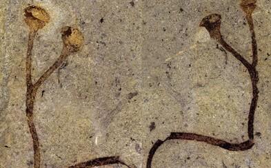 V Národním muzeu byla nalezena nejstarší rostlinná fosilie na světě. V depozitáři ležela bez povšimnutí 150 let