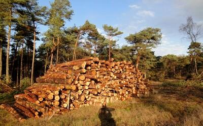 V národných parkoch by mal skončiť výrub stromov. Ochranári ho vďaka novele zákona budú môcť zablokovať