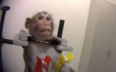 V německé laboratoři testují na zvířatech chemikálie, ze záběrů mrazí. Psa porcují na stole, opice drží spoutané