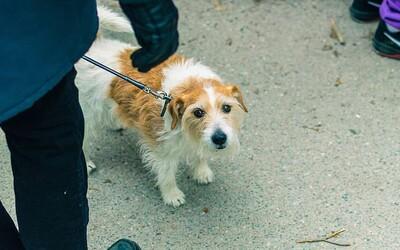 V Nemecku budú musieť venčiť psov dvakrát denne. Psy nie sú plyšové hračky, odkazuje ľuďom ministerka