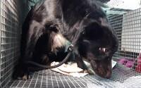 V Nitre mrzol pes pri mŕtvej sučke niekoľko dní, až kým nezomrela. Ich šteniatko zatiaľ hľadalo pomoc