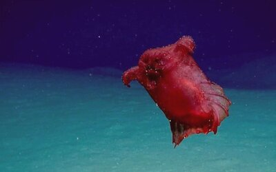 V oceáne pri Antarktíde sa objavilo bezhlavé kuracie monštrum. Vedci nechápu, ako sa tam čudná bytosť dostala