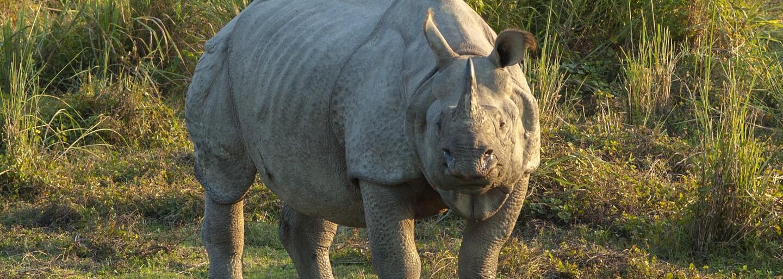 V plzeňské zoo se narodilo mládě velmi vzácného druhu nosorožců