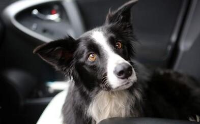 V práci dala výpověď, aby se mohla naplno věnovat hledání ztraceného psa. Po 57 dnech se to podařilo