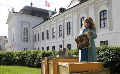 V Prezidentskej záhrade sú od dnešného dňa osadené včelie úle: Chcem poukázať na dôležitosť ochrany včiel, hovorí Zuzana Čaputová