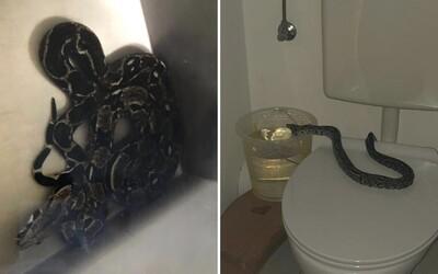 V Rakúsku sa v toalete tento týždeň z ničoho nič objavil už druhý had