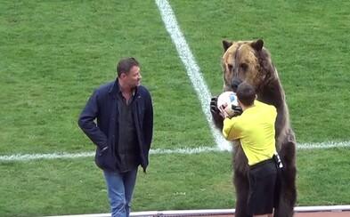 V Rusku je možné opravdu všechno. Před zápasem podal míč rozhodčímu medvěd