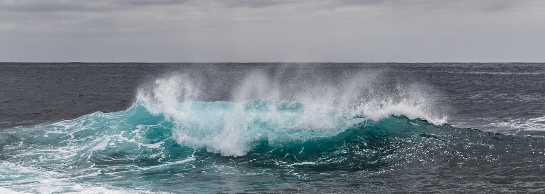 V Rusku odhalili veľrybie pasce, kde uviazlo cez 100 vzácnych zvierat. Odtiaľ odchádzajú trpieť do zábavných parkov
