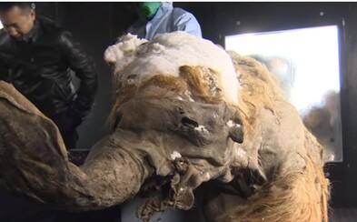 V Rusku z permafrostu profitují lovci mamutích pozůstatků. Byznys přesahuje 50 milionů eur ročně