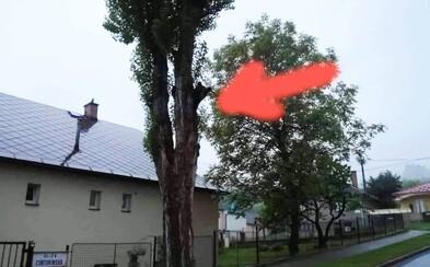 V Ružomberku prekvapil okoloidúcich medveď na strome. Vykúkal spoza kmeňa a nechal sa aj odfotiť