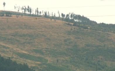 V Slovenskom raji zmizol takmer celý les a ani zďaleka to nie je jediný prípad. Na vine je podľa odborníkov nenásytnosť