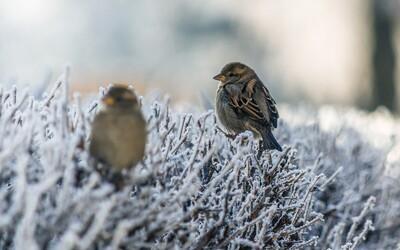 V stredu bude ešte chladnejšie ako v utorok, na niektorých miestach Slovenska sa vyskytnú snehové prehánky a prízemné mrazy