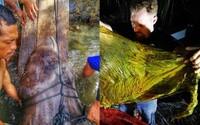 V tele mŕtvej veľryby našli neuveriteľných 40 kilogramov plastového odpadu