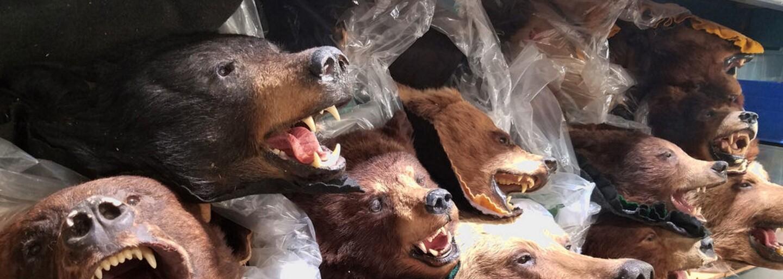 V tomto domě leží 1,3 milionu mrtvých těl zvířat. Ze zvrácených choutek lidí ti bude do pláče, téměř všichni tvorové padli rukou pytláků