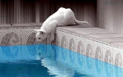 V Turecku otevřeli koupaliště pro kočky. Chlupatí miláčci se tu můžou osvěžovat i učit plavat