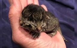 V USA se narodilo kotě, které má 2 tváře. Unikátní zvíře dokáže jedněmi ústy jíst a současně druhými mňoukat