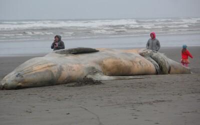 V žaludku mrtvé velryby našli 100 kilogramů odpadu