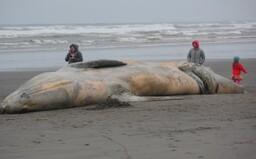 V žalúdku mŕtvej veľryby našli 100 kilogramov odpadu, vrátane rybárskych sietí či plastových pohárov