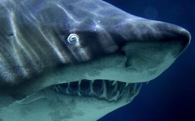 V žralokovi našli ľudskú ruku. Turista ignoroval zákaz plávania
