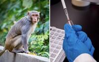 Vakcína proti koronavírusu zrejme zafungovala u opíc. Bude fungovať aj u ľudí?
