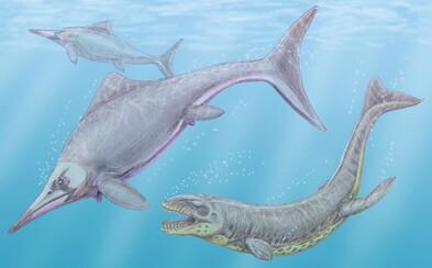 Ve Skotsku byl nalezen možná největší tvor, který kdy žil na Zemi. Měřit by se mohl jen s plejtvákem obrovským